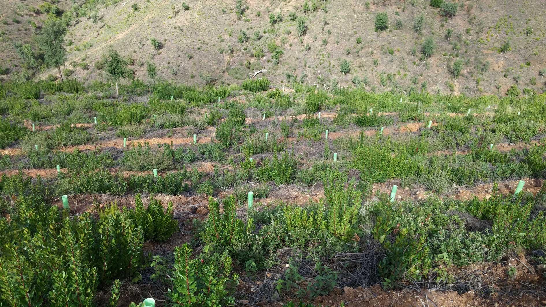 Operações Florestais